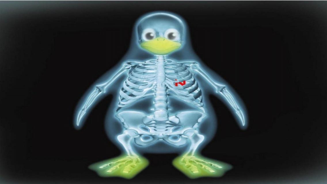 Animated Penguin Bones IPhone 5 Wallpapers