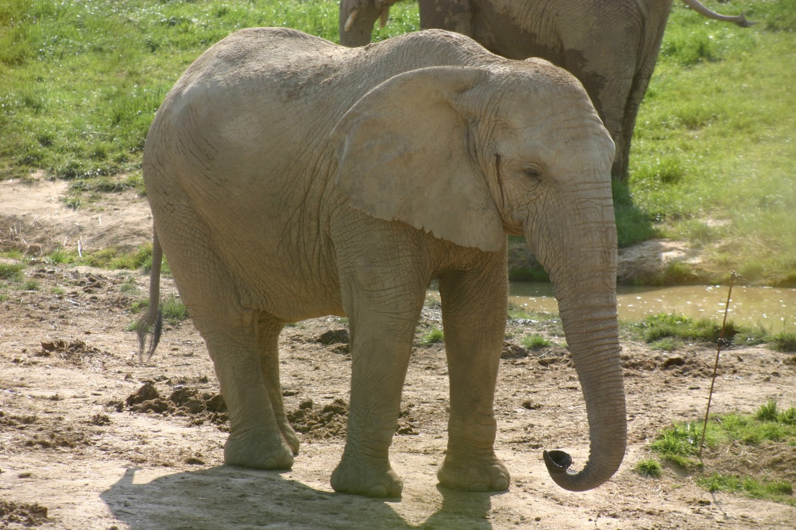 The African Elephant | Amazing Facts & Photographs ...