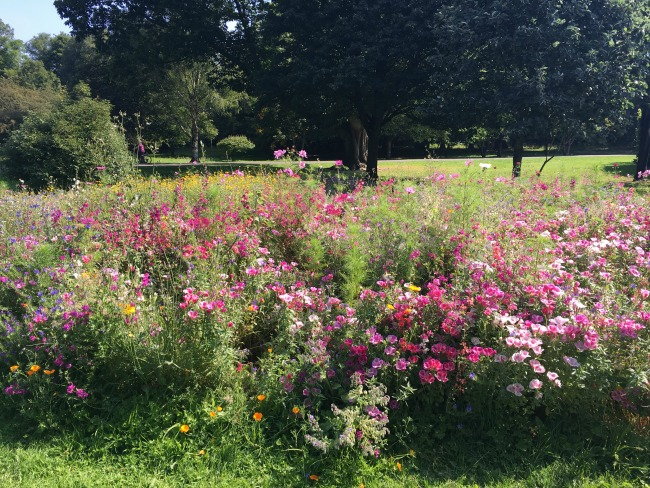 wild-flowers-in-park