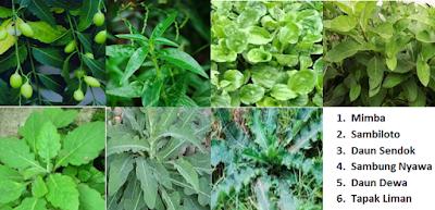 Herbal diabextrac hpai - www.infojagakesehatan.blogspot.co.id - isman