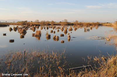 Estany a Riet Vell