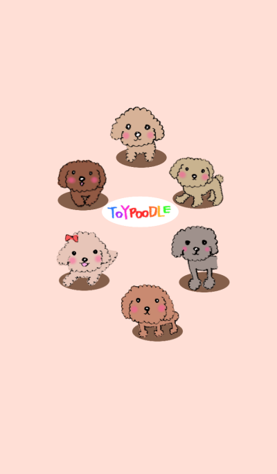 LOVE TOYPOODLE