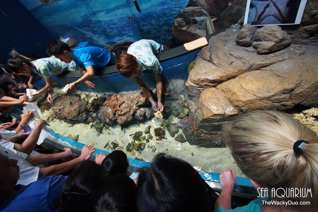 Sea aquarium rws review the wacky duo singapore family for Pool show discovery