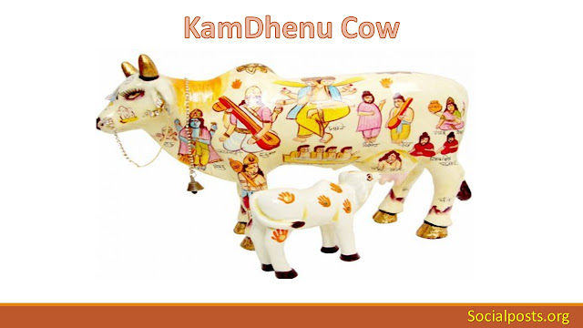 Why are cows sacred in Hinduism