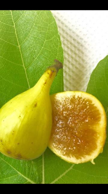 MEVA HURON Figs