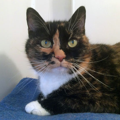 Mouse was adopted from our Torquay & District Branch