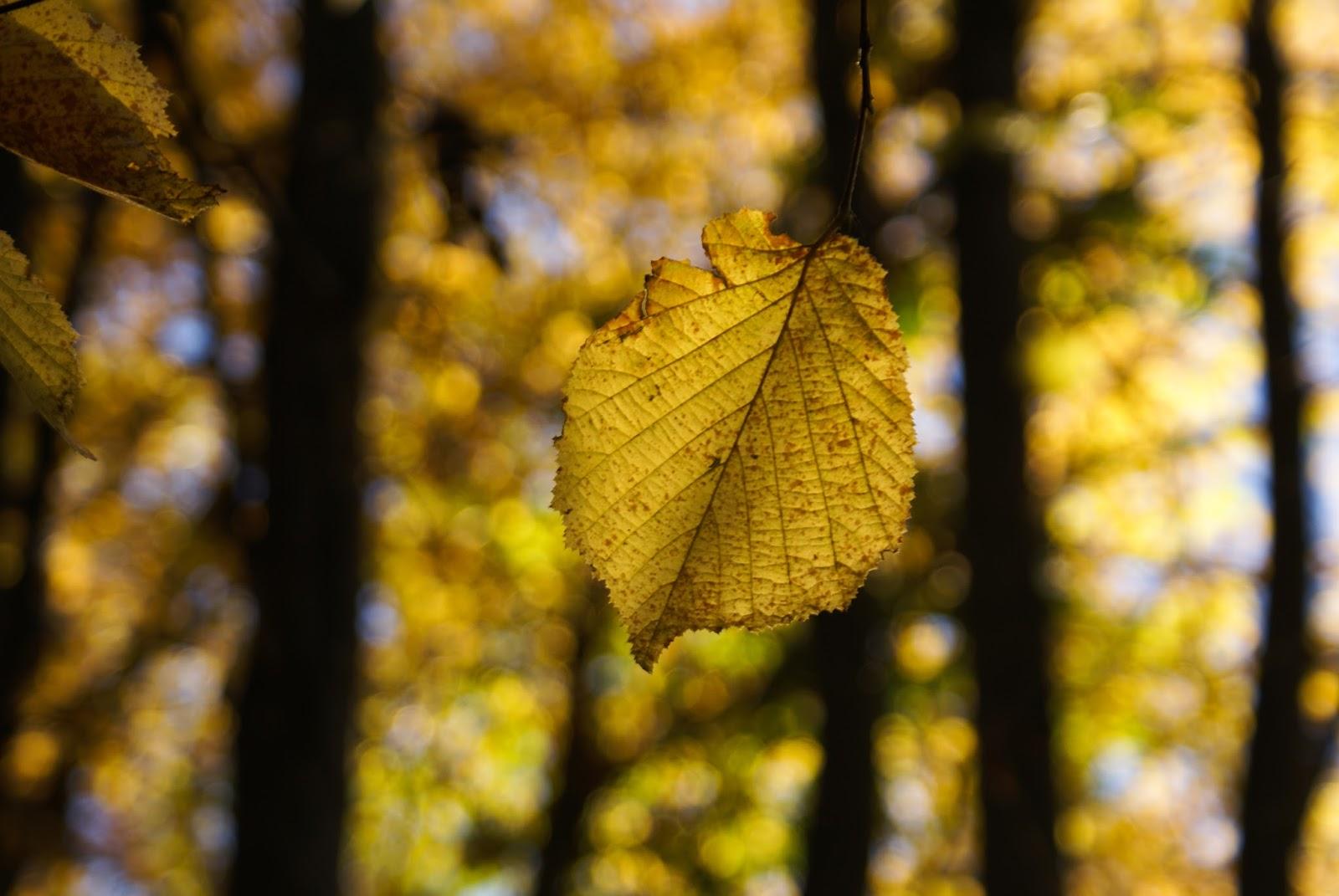 automne feuilles nature