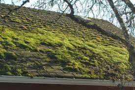 Surveying Property Pitched Roofs Houses Part 2 Moss