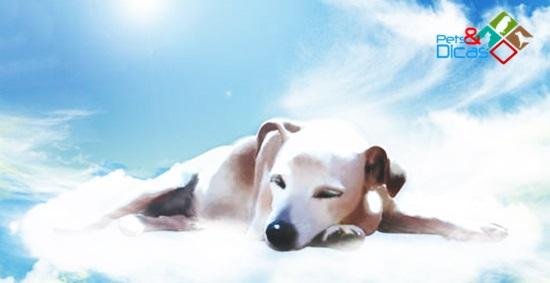 Cão no céu