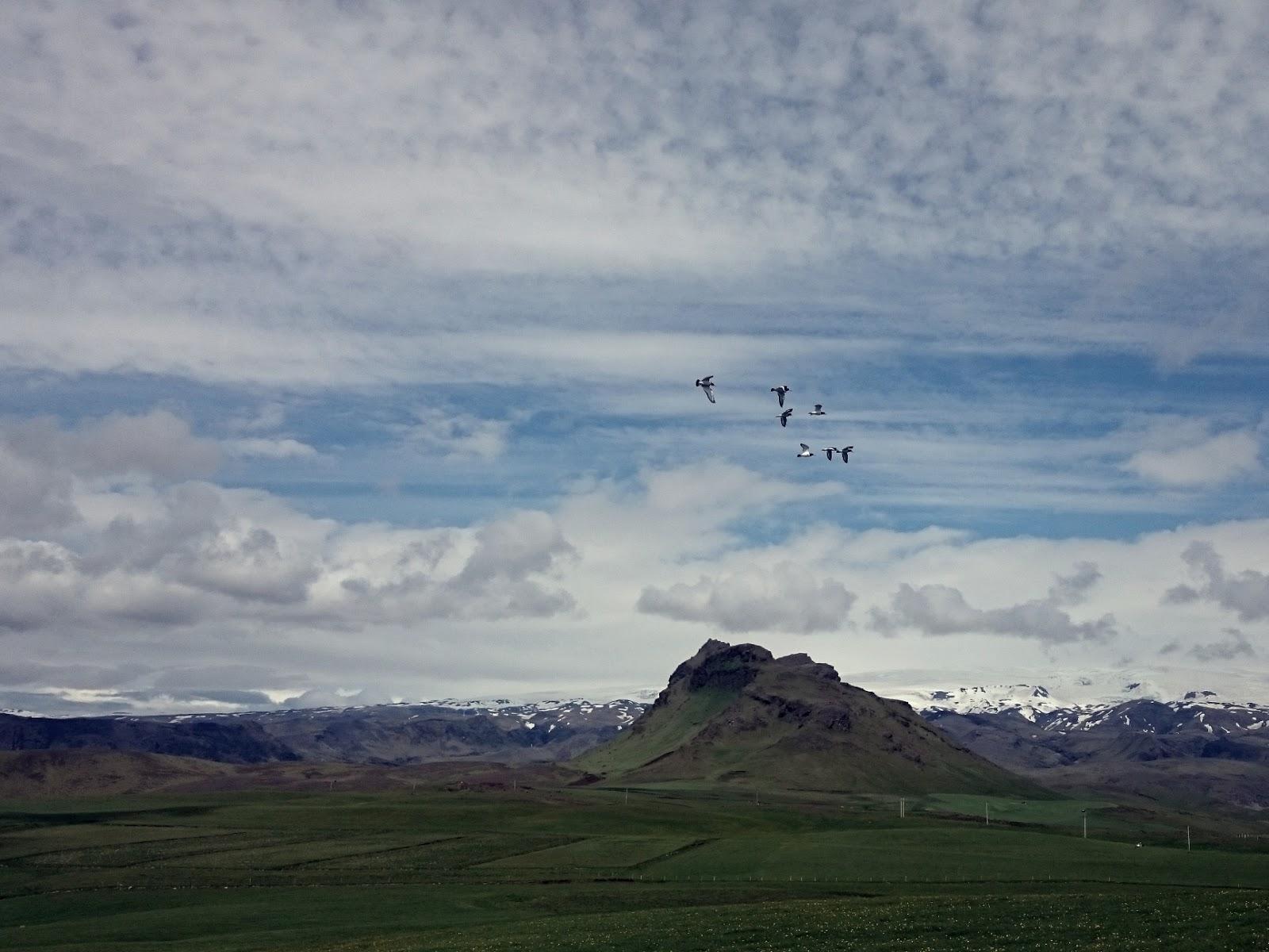 Ptaki, Islandia, panidorcia, Pani Dorcia, marzenia, podróże, wolność