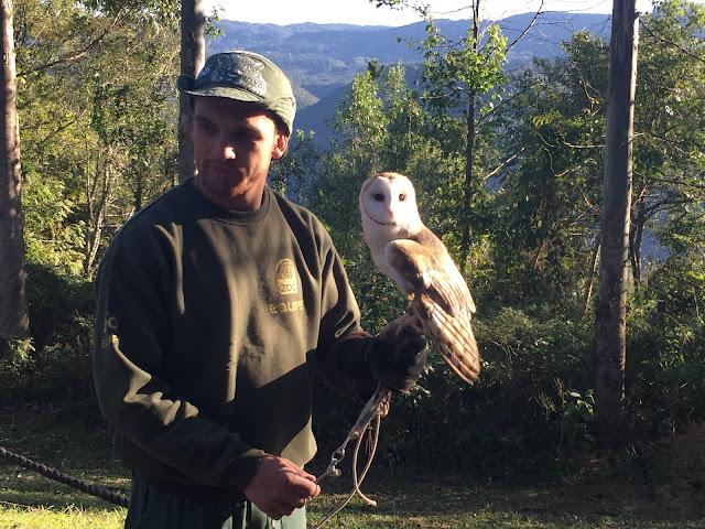 Educador ambiental mostra coruja que teve sua asa amputada por um tiro e não pode mais voar