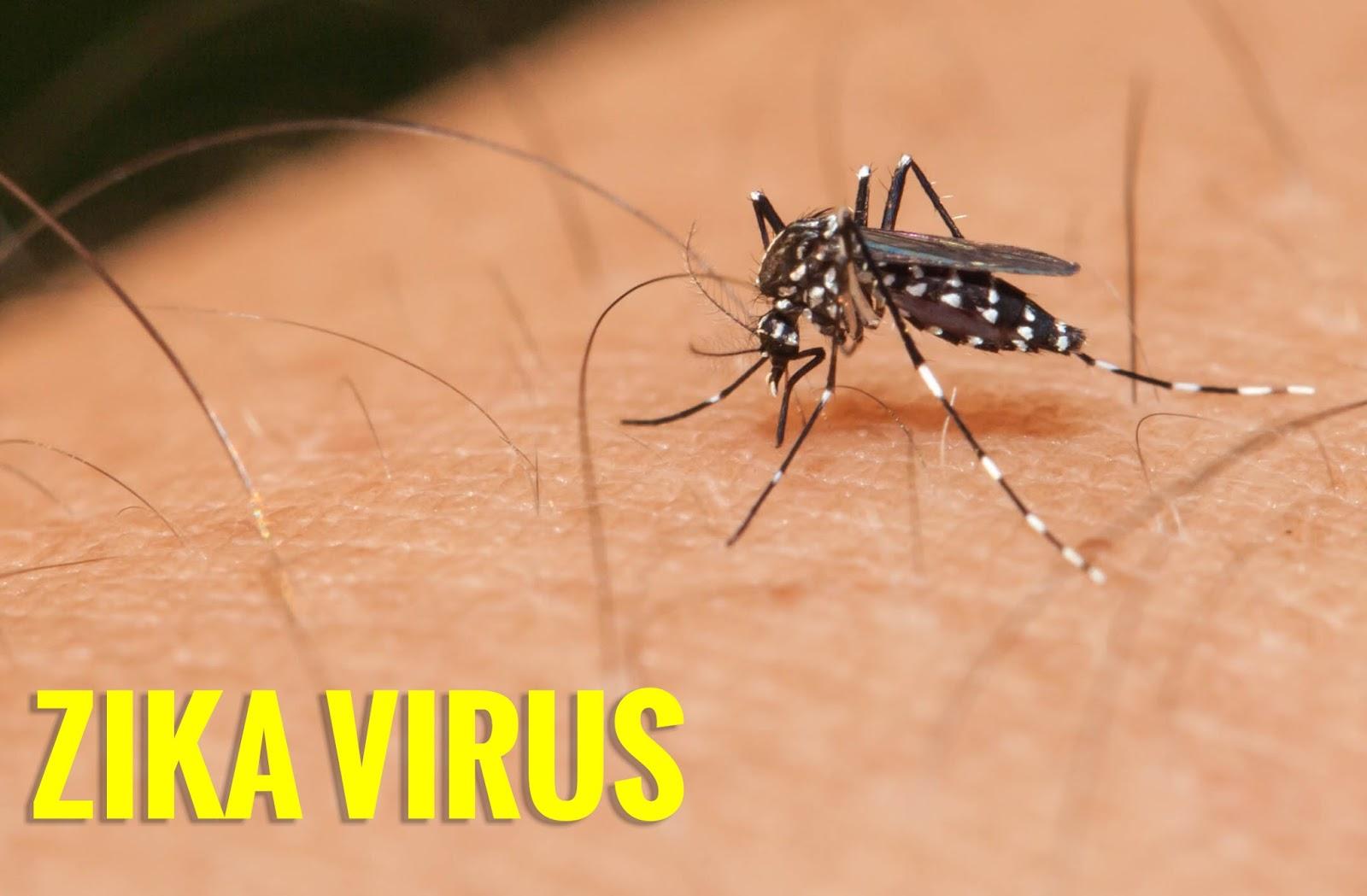 Waspadai Bisul Virus Zika   Ciri Gejalanya