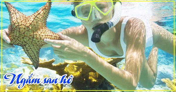 Lặn ngắm san hô khi đi du lịch Phú Quốc