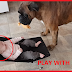 'Play With Me!' Funny Boxer Tries To Get Tiny New BFF To Play Fetch With Him
