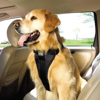 6 Travelling Tips to Keep Your Dog Safe