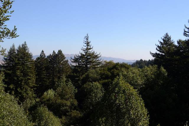 Mount Diablo through the trees