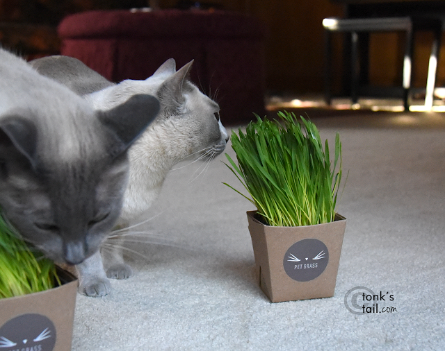 Faraday guards his Pet Grass from all comers. Like Allie.