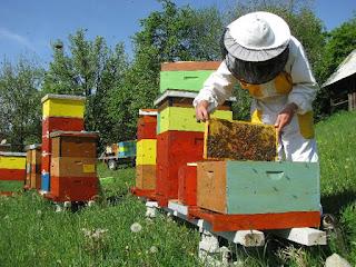 Αποτέλεσμα εικόνας για μελισσοκόμοι