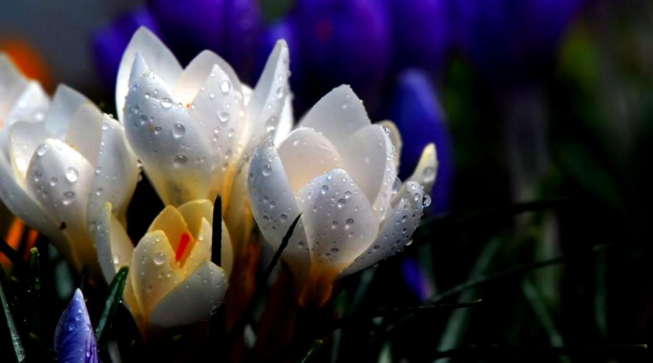 Beautiful Rain Hd Wallpapers Free Download Its Wallpapers