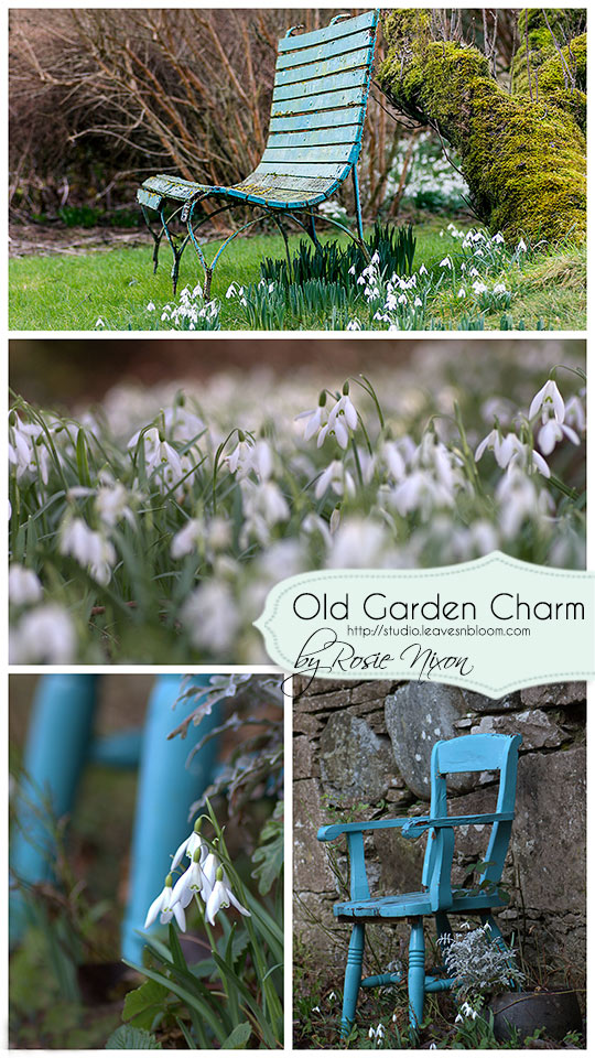 winter garden photography Perthshire