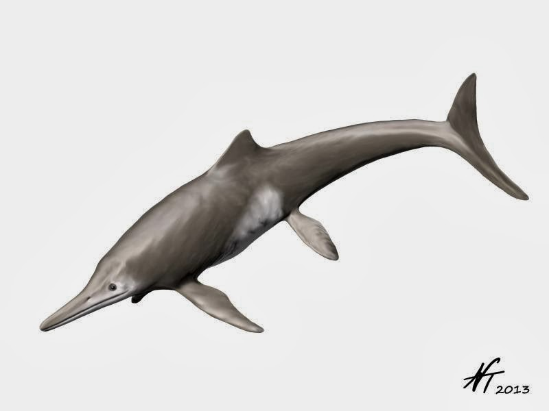 Temnodontosaurus platyodon | Spinops  Temnodontosauru...