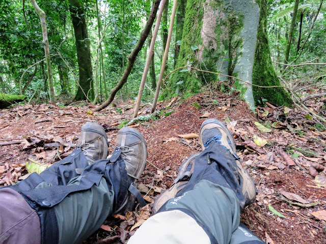 Gaiter-clad legs in Bwindi Impenetrable Forest in Uganda