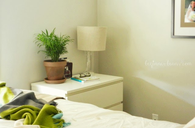 air-purifying palm in the bedroom