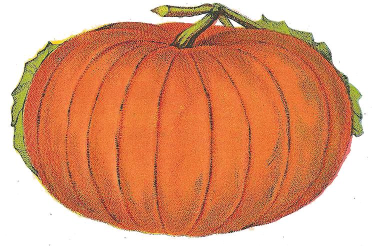 The Graffical Muse: Vintage Pumpkin Illustration from ...