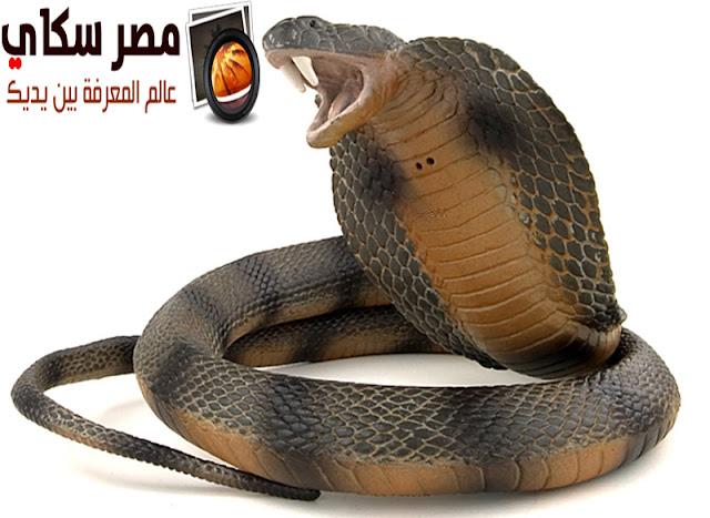 كيف نشأت الثعابين ؟ Snakes