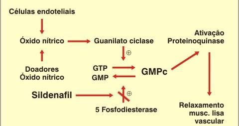 Hipertensão, Saúde Vascular e Óxido Nítrico: Qual a relação entre o Óxido Nítrico, o GMP cíclico e o Viagra?