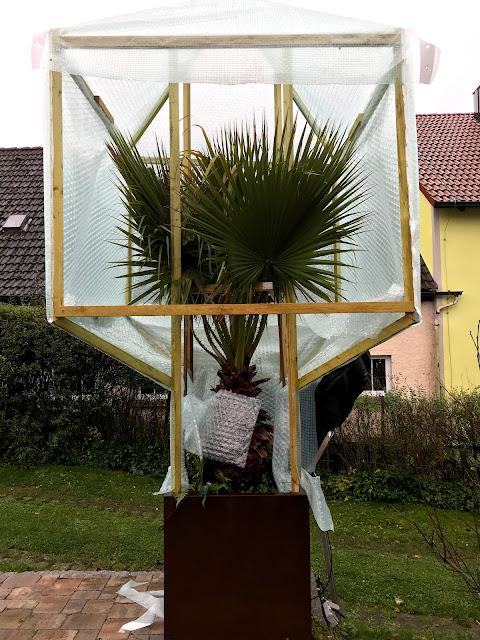 Palme im Freien überwintern- Palmengewächshaus für Kübel