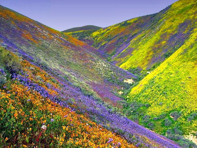 Valley-Of-Flowers.jp