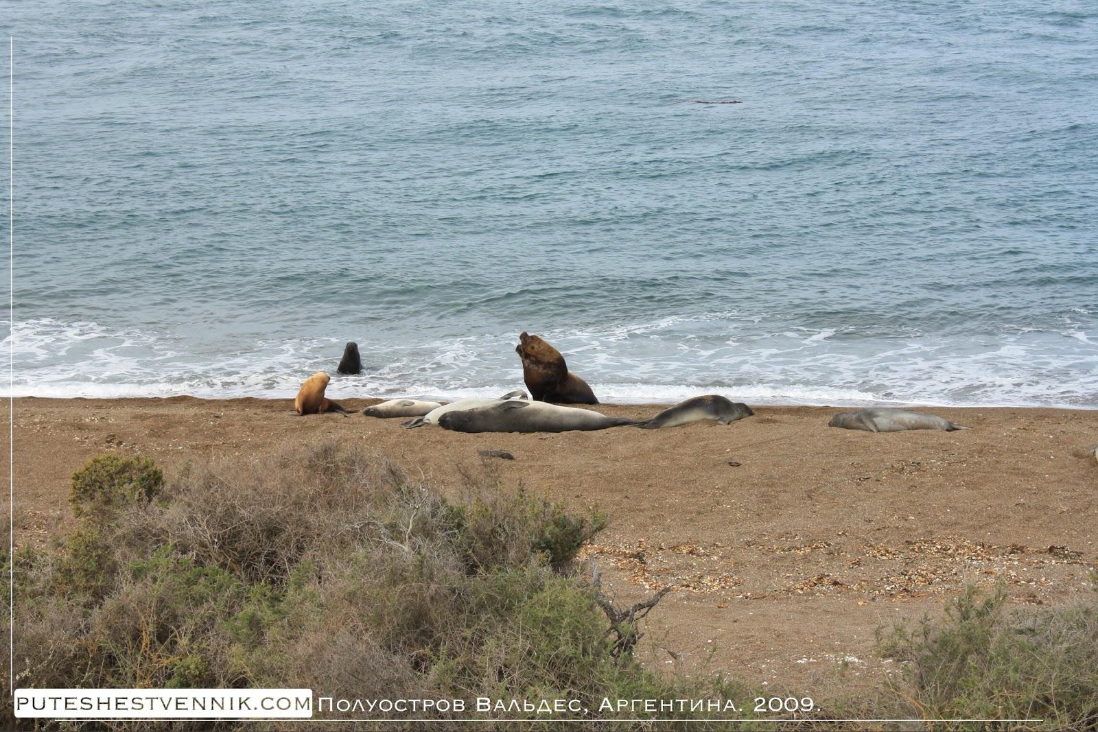 Морские львы и тюлени