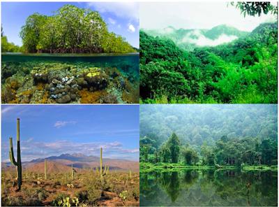 Tipe-tipe Ekosistem