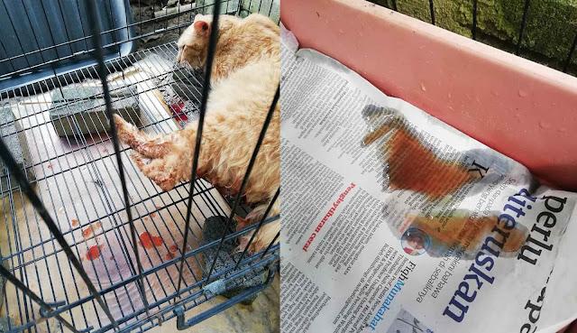 Pengalaman Kucing Sporo Dan Batu Karang