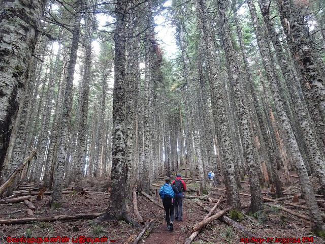Bald Mountain Hike Oregon