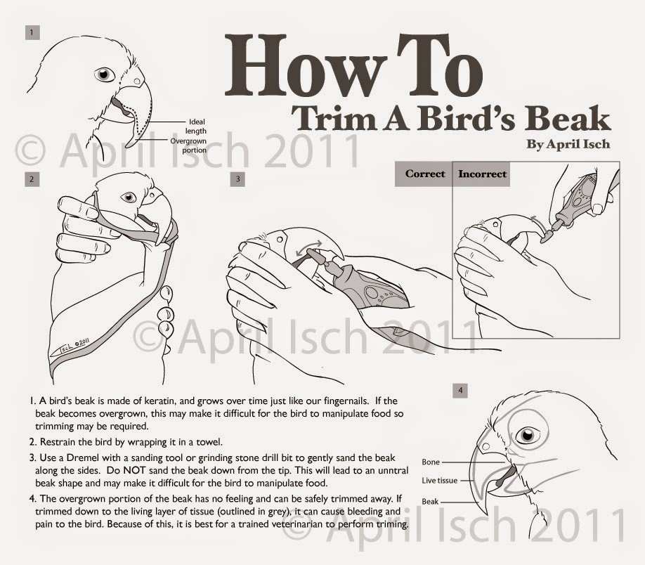 How to Trim Your Bird's Nails