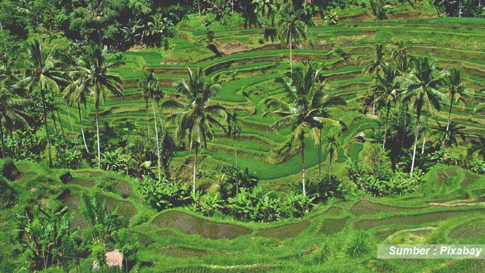 Hotel Traveloka di Bali Indonesia
