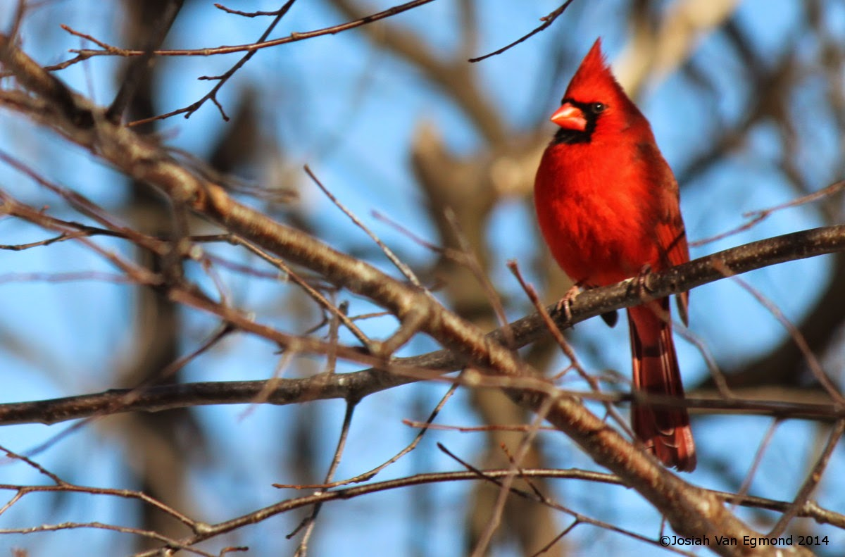 Birds in Your Backyard: Road Trip to the East - Ontario ...