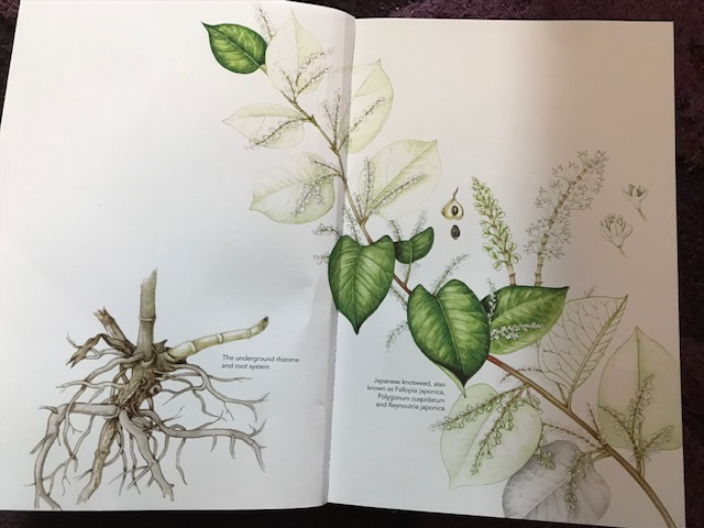 Book Review: Japanese Knotweed Unearthing The Truth By
