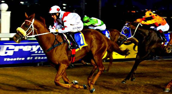 Image of Greyville Night racing with link to Hollywoodbets' best bets and tips for Greyville Wednesday 15 June