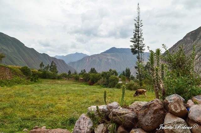 Voyage dans la Vallée Sacrée au Pérou