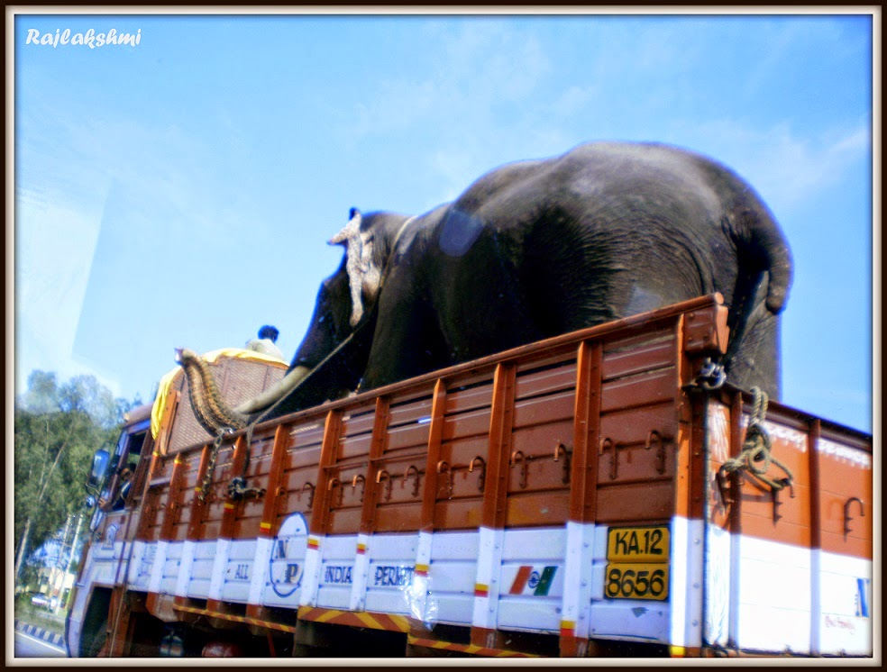 Vehicles - carrying - Elephants