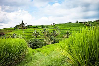 Pengertian Jaring Makanan dalam Ekosistem serta contohnya
