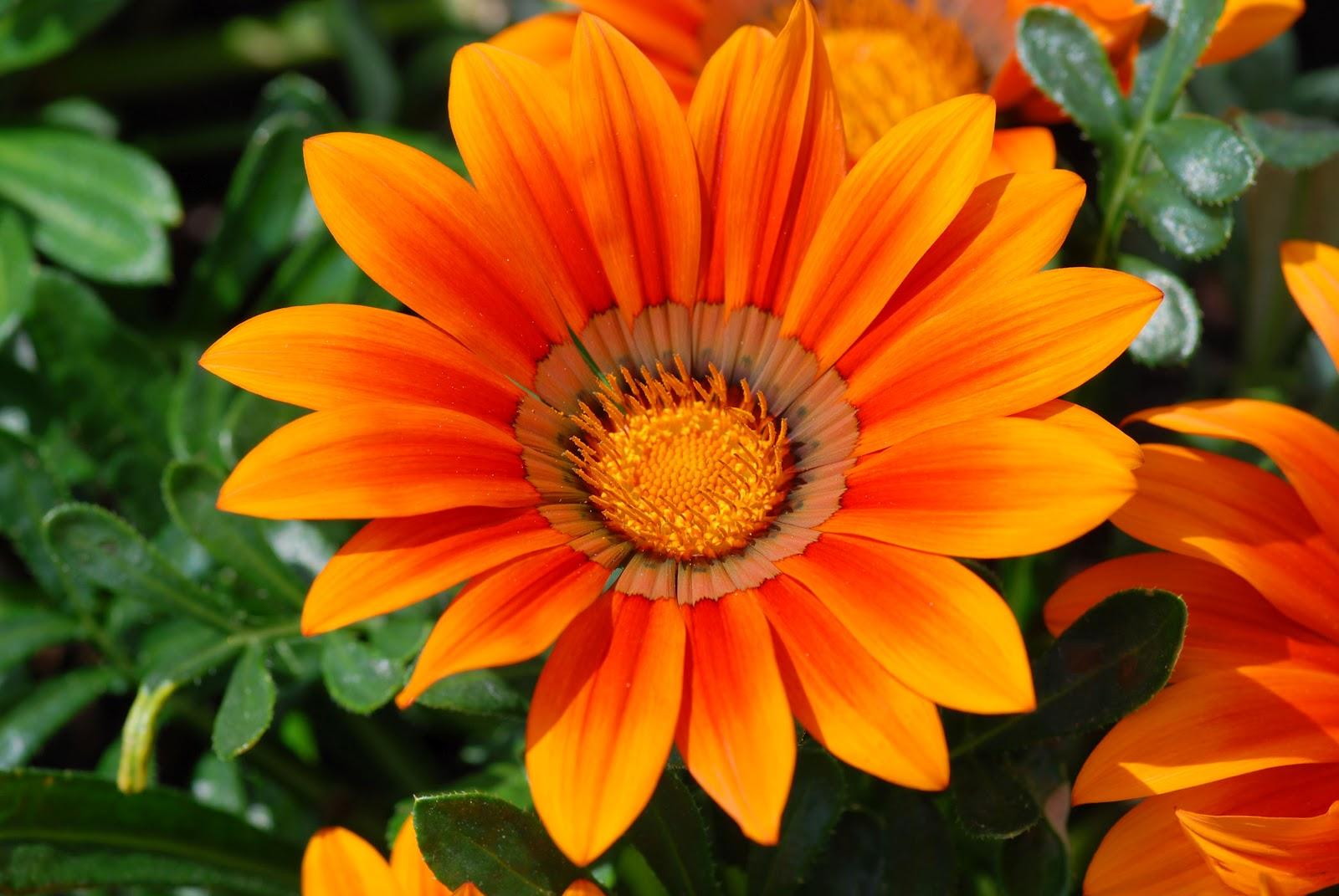 grappige afbeeldingen: afbeeldingen bloemen; oranje bloem