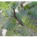http://plantasmedicinalesatusalud.blogspot.com.ar/2014/09/salvia.html