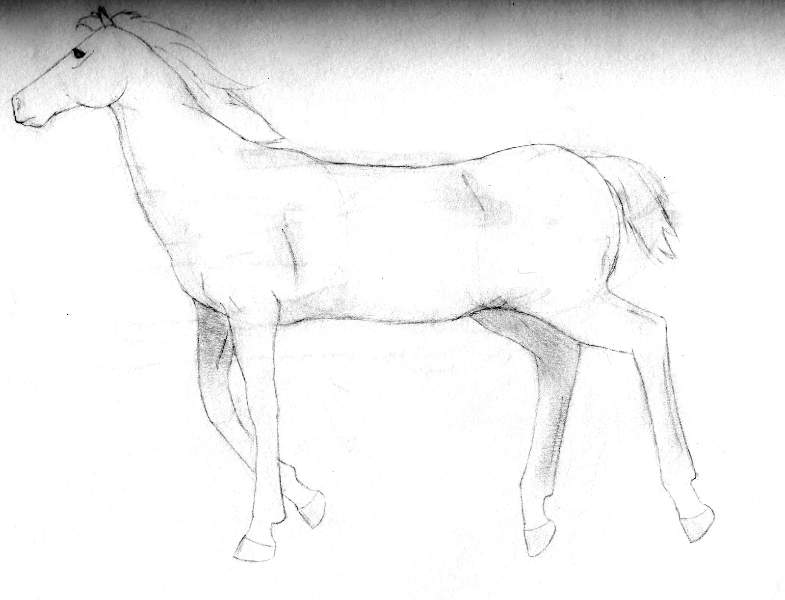 Galloping horse sketches - photo#38