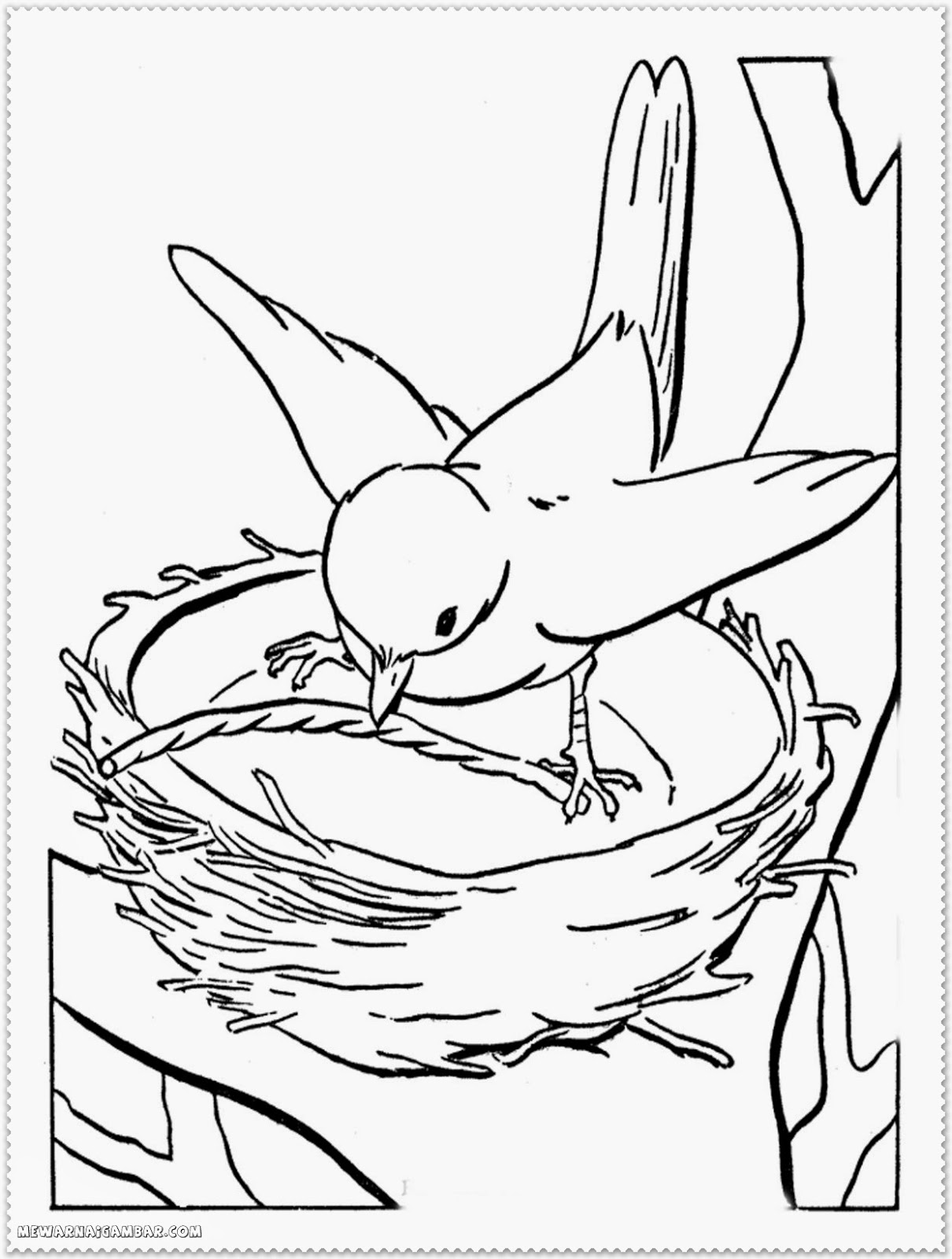 Bird In Nest Coloring Pages