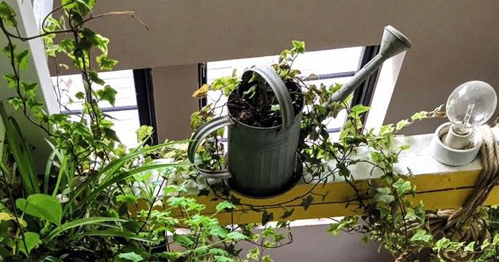 Mitt gröna lilla rum HäNGANDE FåTÖLJ& HäNGANDE SäNG