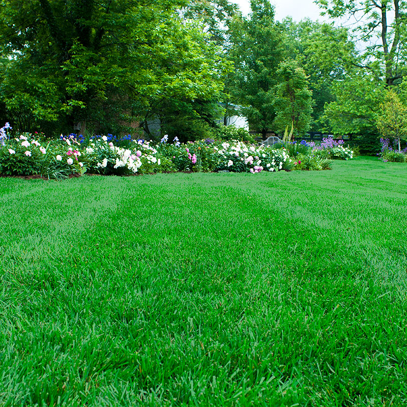 Best Lawn Care In Boise Idaho Spring Lawn Care Steps For A Healthy And Beautiful Yard In Boise Eagle Meridian And Nampa Idaho